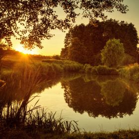 Podvečer u rybníčku .......