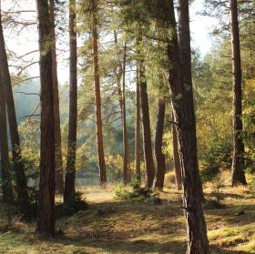 atmosféra lesa