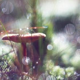 Jak jsem potkal houbu