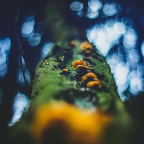 Do koruny stromu