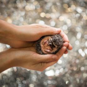 Malý ježeček
