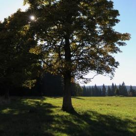 ... sun tree