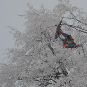 Stromom je tiež zima