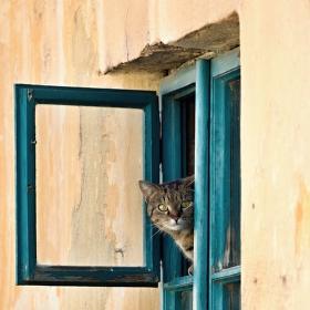 Pozorovatelka
