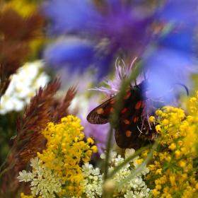 motýl na luční květině