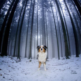 Dog in da Fog