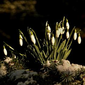 Jaro nebo zima ?
