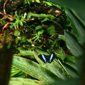 Tropičtí motýli - Botanická zahrada Praha