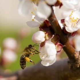 Pilné včelky pokračování