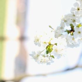 Květy...