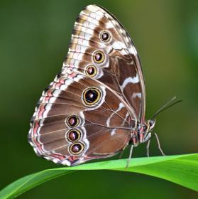 Zátiší s motýlem