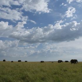 Přelet nad Masai Mara
