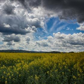 Žluté údolí