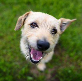 Pes v trávě