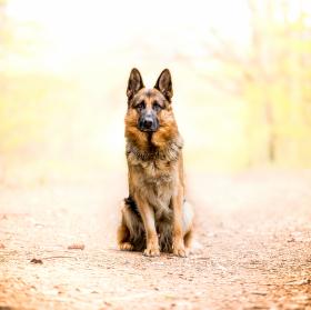 Pan pes