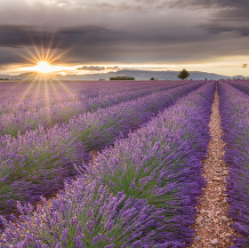 Romance in Provence