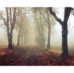 Podzim v aleji Cinzendorf