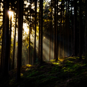 V lesích