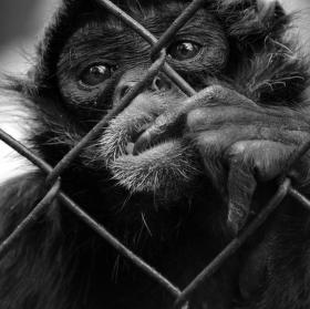 Vězeň...