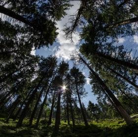 Jesenický les