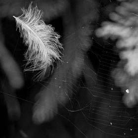 V síti pavučin,,,,