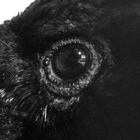 The Raven jak od Edgara Allana Poea