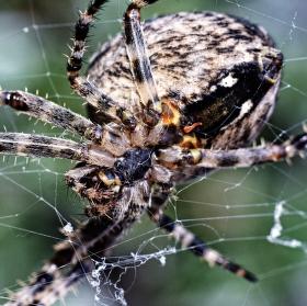 Máte rádi pavoučky?