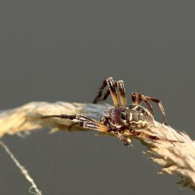 Ranní pavouček...
