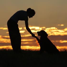 Pes, přítel člověka