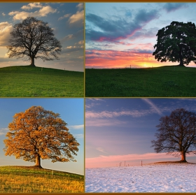 Příběh stromu II