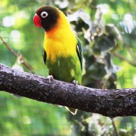 papoušek v kleci