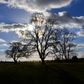 V koruně stromu..