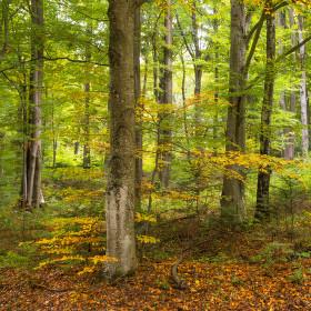V lese na konci leta.