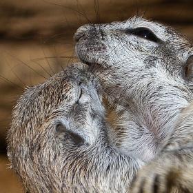 Dej mi pusu, nikdo se nedívá :-)