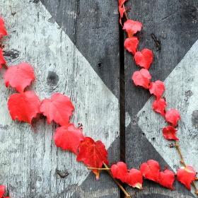 Podzimní variace...