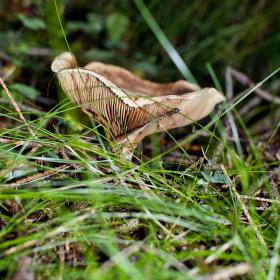 z lesa ...
