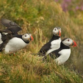 obrázky z islandské přírody 37 aneb ... partička sympaťáků