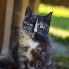 Naše kočička