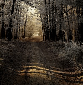 Cestou z lesa do mlhy