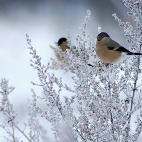 V zimním čase
