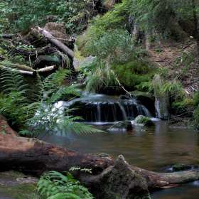 Šumava - cestou k Plešnému jezeru