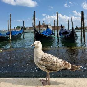 Vyhled v Benatkach