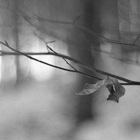 Zimní samota