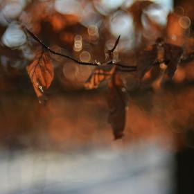Světlo v koruně stromu...