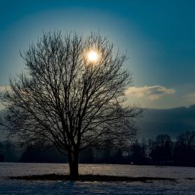 Duše stromu