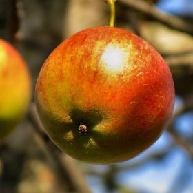 Jablková trojice