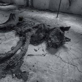 Dokonalá mumie