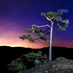 Pozorovatel hvězd