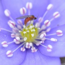 Hmyz a květina