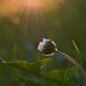 úklon před západem slunce